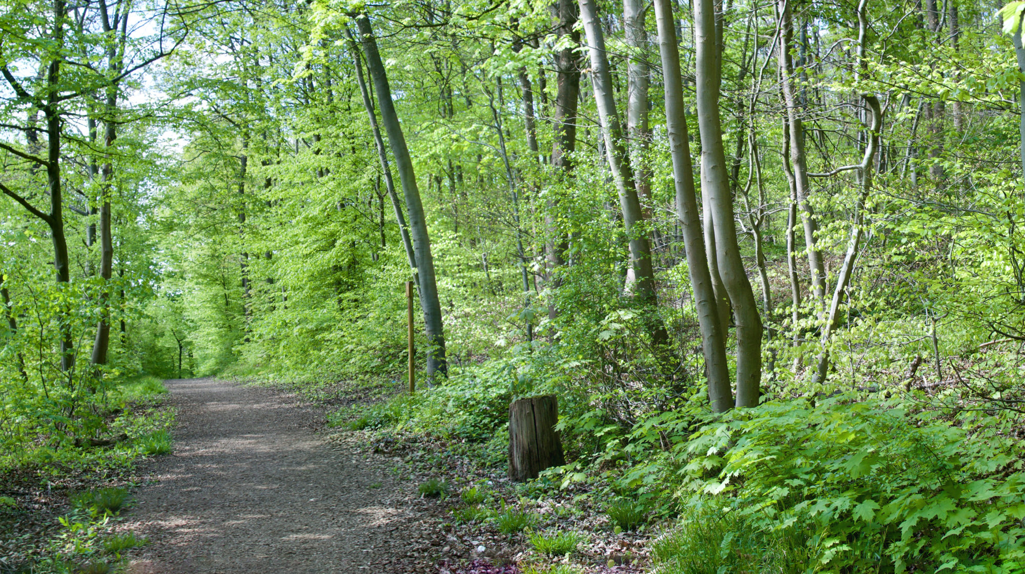 Löschblättel